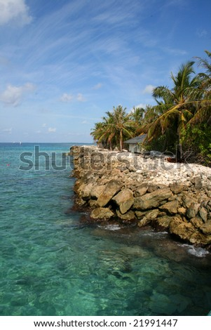 palm trees on a beautiful tropical coast