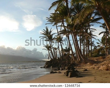 Palm Trees on a Hawaiian Beach - stock photo