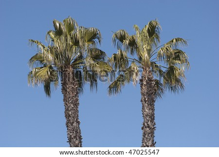 Palm trees on a sunny day