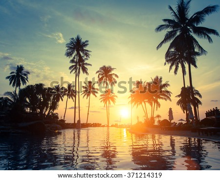 Palm trees on a tropical seaside during amazing sunset.