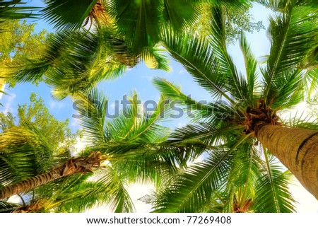 palm trees on blue sky and white clouds - stock photo