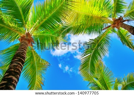 palm trees on blue sky and white clouds on Cozumel in Mexico, perspective looking up - stock photo