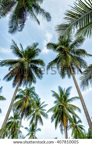 Palm trees on blue sky background - stock photo