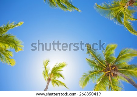 Palm trees on bright summer day with clear blue sky - stock photo