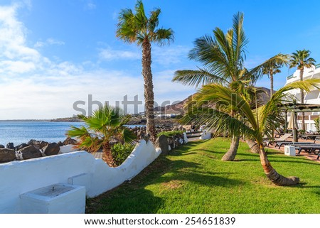 Palm trees on coastal promenade in Playa Blanca holiday village, Lanzarote, Canary Islands, Spain