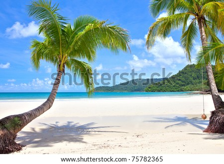 Palm trees on empty sunny beach - stock photo