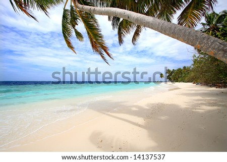 Palm trees on exotic beach - stock photo