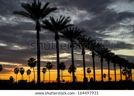 Palm trees on Gene Autry Way at dusk in the City of Anaheim, CA. - stock photo