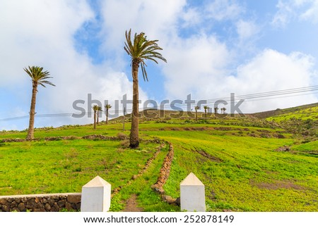 Palm trees on green meadow in Haria mountain village, Lanzarote, Canary Islands, Spain - stock photo