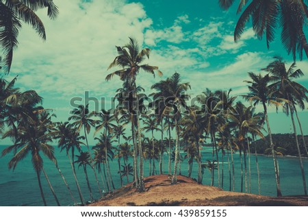 Palm trees on hill at tropical coast, vintage toned and retro color stylized
