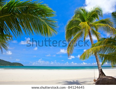 Palm trees on luxury exotic beach in tropical hotel. Summer view.