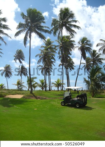Palm trees on luxury golf course - stock photo