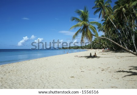 Palm Trees on Martinique Beach