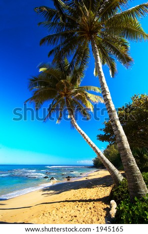 Palm trees on Moloaa Bay on Kauai Hawaii. More with keyword Series001