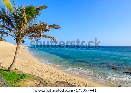 Palm trees on Morro Jable tropical beach, Fuerteventura, Canary Islands, Spain - stock photo