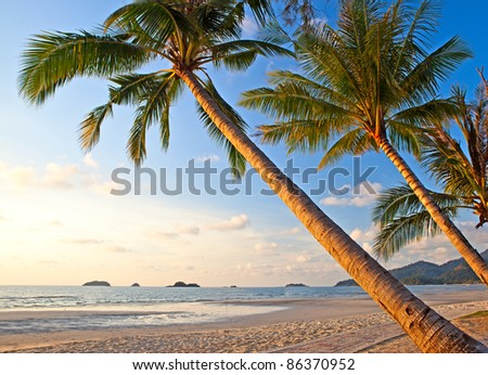 Palm trees on paradise beach under sky with shining sun and blue sea. Summer nature view. - stock photo