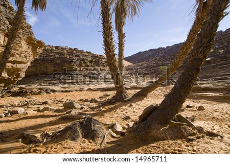 Palm trees on Sahara desert surrounded by hills.
