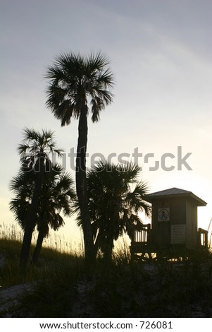Palm trees on seashore at clearwater beach florida - stock photo