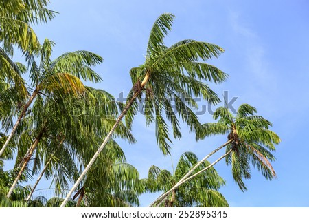 Palm trees on the background of a beautiful blue sky - stock photo