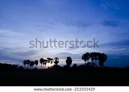 palm trees on the background of a beautiful sunset - stock photo