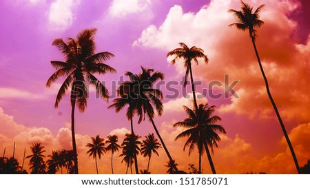 palm trees on the background of beautiful sunset. - stock photo