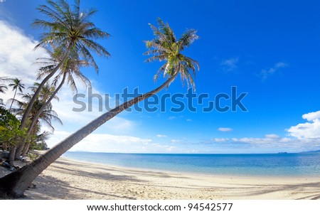Palm trees on the Bang Por beach sand on tropical resort Koh Samui, Thailand - stock photo