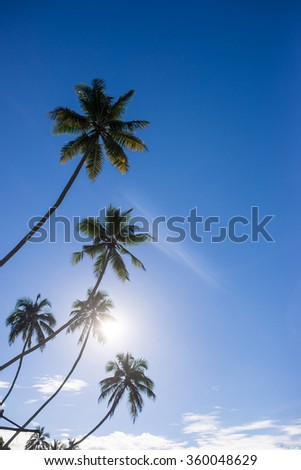 Palm trees on the beach at dawn in Sri Lanka