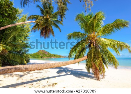 Palm trees on the beach at Praslin island, Seychelles  - stock photo