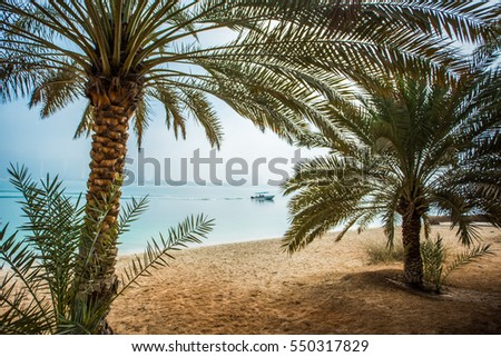 Palm trees on the beach. Beach and the skyline of Abu Dhabi, United Arab Emirates