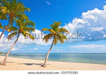 Palm trees on the Beach in Key West with blue sky and ocean water in the background. Famous travel destination in South Florida