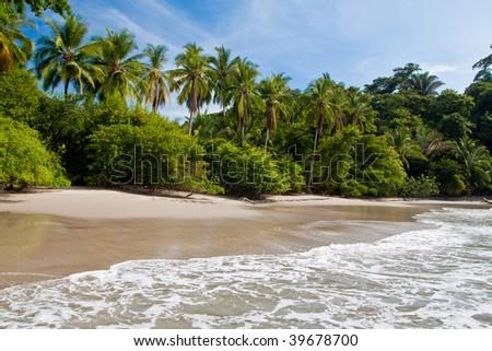 Palm trees on the beach near the sea with blue sky - stock photo
