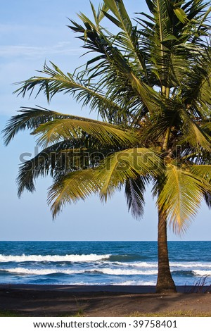 Palm trees on the beach near the sea with blue sky