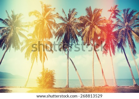 Palm trees on the beach with old film light leaks, vintage stylized - stock photo