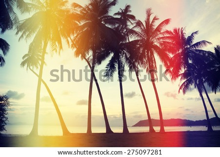 Palm trees on the beach with retro film light leaks, vintage stylized - stock photo