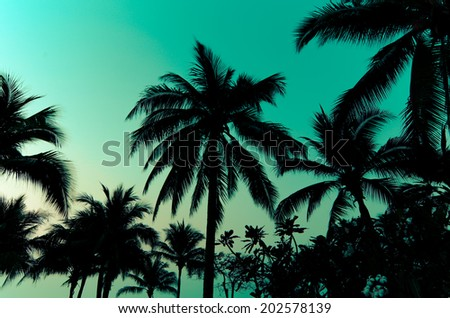 Palm trees on the beautiful sunset background. - stock photo