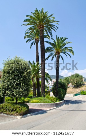 Palm trees on the Cote d'Azur, France