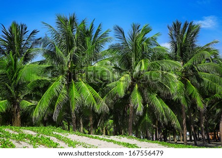Palm trees on the sandy beach