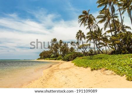 Palm trees on the shore of Kahala Beach on Oahu, Hawaii - stock photo
