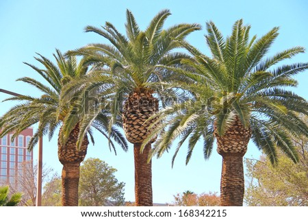 Palm trees on the streets of Las Vegas. Nevada - stock photo