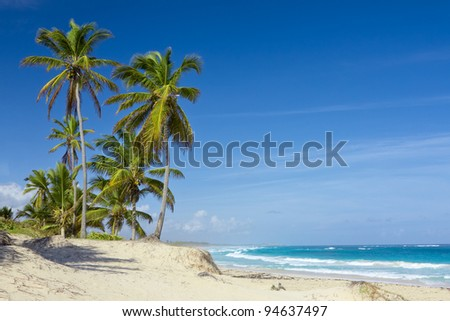 Palm trees on the tropical beach, Bavaro, Punta Cana, Dominican Republic