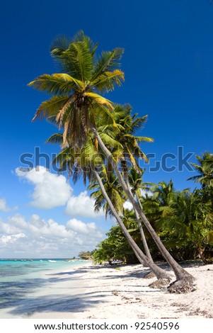 Palm trees on the tropical beach, Saona Island, Caribbean Sea, Dominican Republic - stock photo