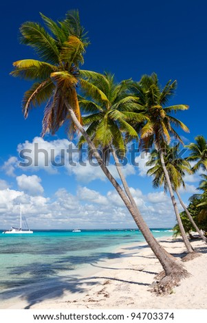 Palm trees on the tropical beach, Saona Island, Caribbean Sea, Dominican Republic