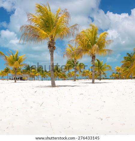 Palm trees on the white sand. Playa Sirena. Cayo Largo. Cuba.