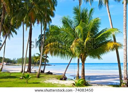Palm trees on tropical beach near blue sea. Dream vacation. - stock photo