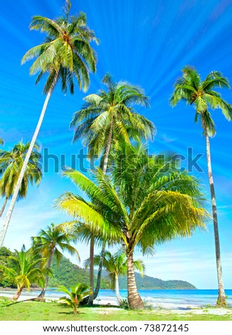Palm trees on tropical beach near the sea under blue sky. Exotic  nature. - stock photo