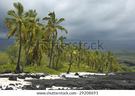 Palm trees on volcanic coastline in the Big Island of Hawaii.