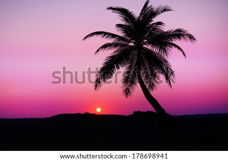 Palm trees over dramatic pink sunset sky