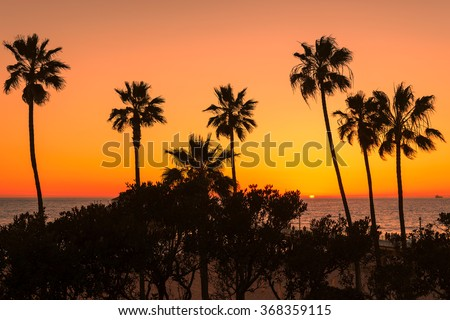 Palm trees over the Manhattan Beach at orange sunset, Los Angeles, California - stock photo
