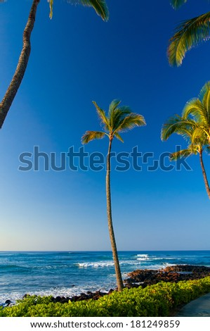 Palm trees overlooking the Pacific Ocean on the island of Kauai, Hawaii, USA
