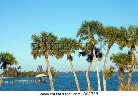 Palm trees qrowing along the riverfront on a clear, bright day with a boathouse and dock in the background